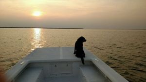 Milly on the Boat